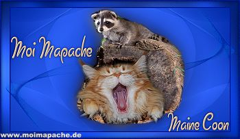 "Bild ""Links:moimapache.jpg"""